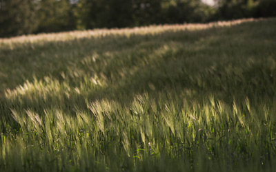 How GreenCALC can help